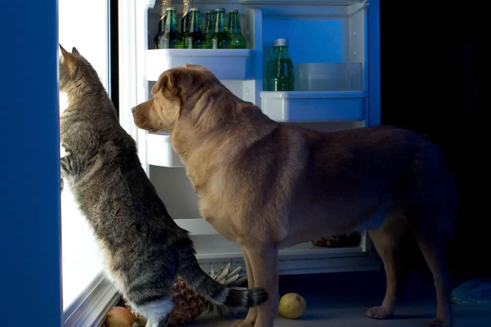 Surprising studies: Dogs eat fat, cats prefer carbs